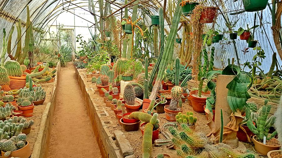 Moorten Garden Cactorium